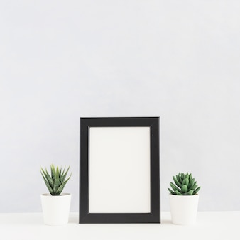 Potted cactus plant between the picture frame on desk against white background