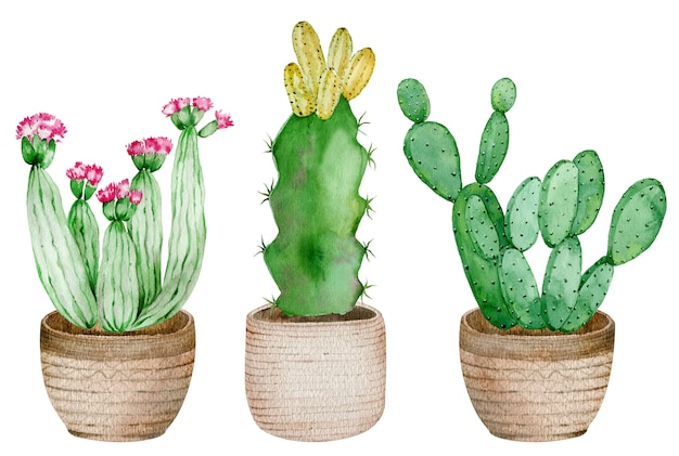 Potted cactuses isolated on the white background. watercolor hand drawn set illustration.