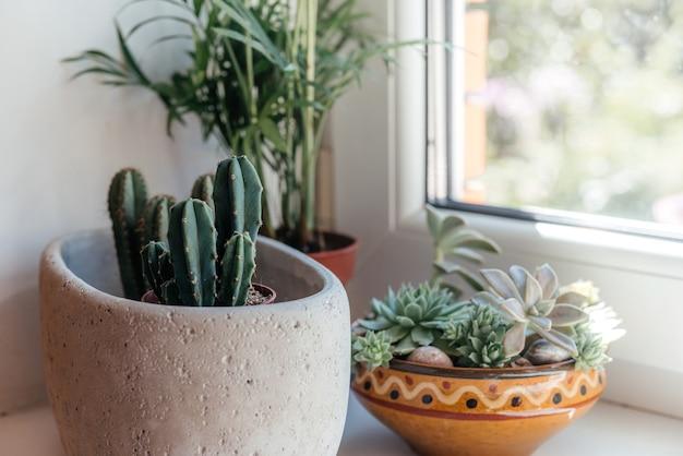 화분에 심은 선인장 다육 식물과 집 내부의 잎이 많은 식물