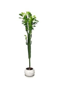 화분에 심은 다 식물 흰색 배경에 고립 프리미엄 사진