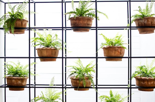 Potted fern house plants on white shelf against white wall