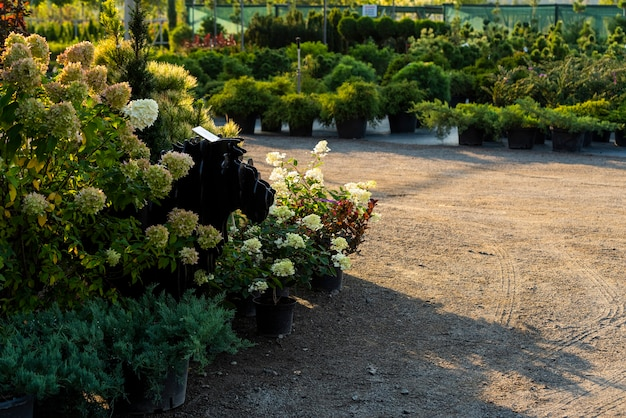 정원 중앙의 화분에 심은 꽃과 욕조 및 상록수, 식물 및 관목 및 수풀