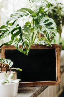 Potted green plants on window. home decor and gardening concept. blank blackboard frame