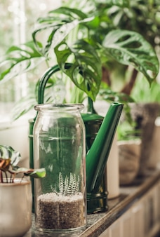 Potted green plants on window. home decor and gardening concept.