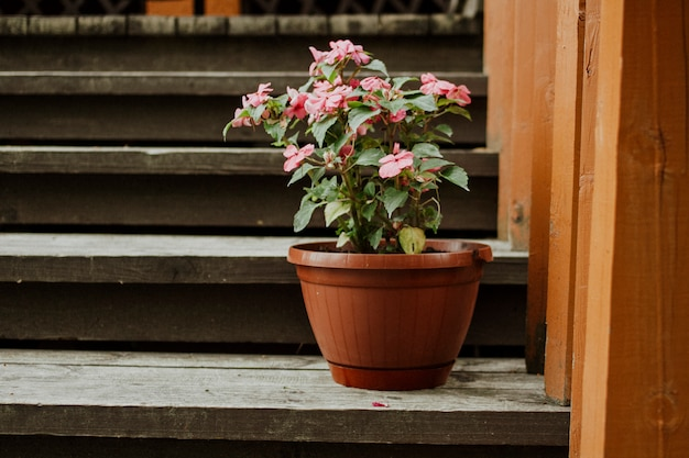 Potted home flower on stairs at home with place for text