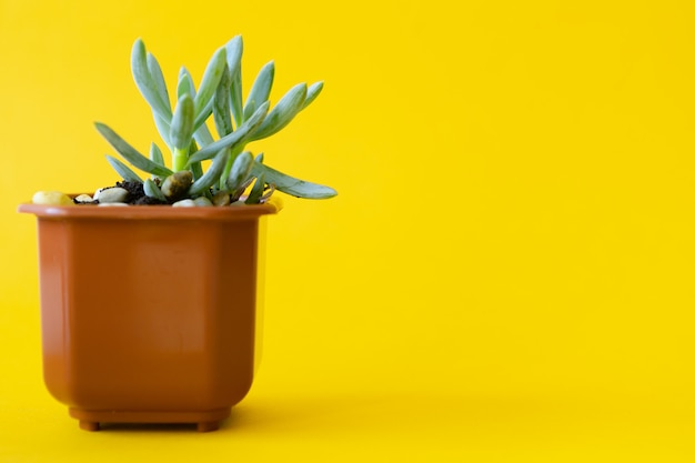 Potted house plant over a yellow bright background