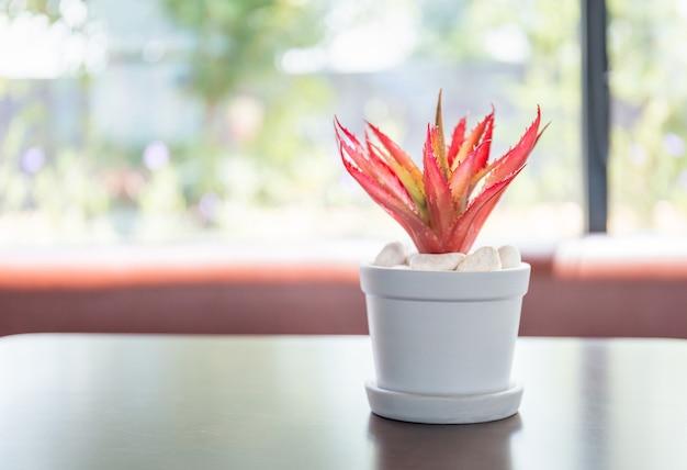 ぼやけたテーブルの上の鉢植えの観葉植物