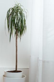 モダンなアパートの鉢植えの観葉植物