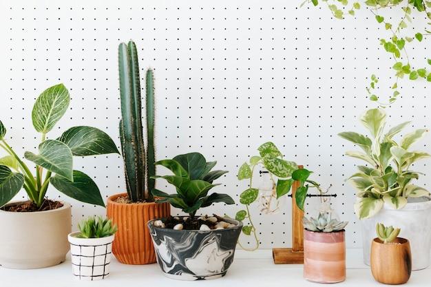 白い背景のテーブルに鉢植えの観葉植物
