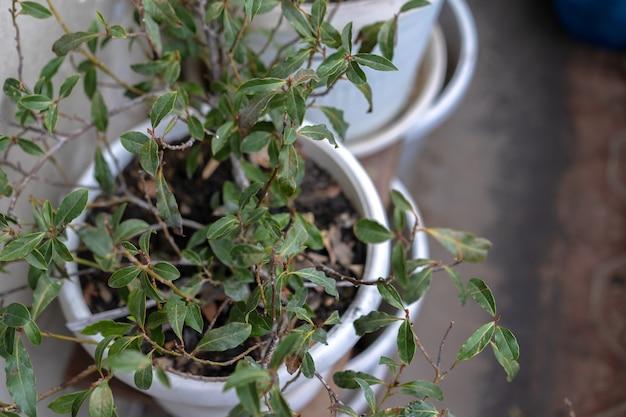 꽃과 화분에 심은 실내 식물