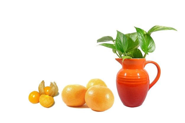 Potted marble queen pothos plants with mandarin oranges and cape gooseberries on white background