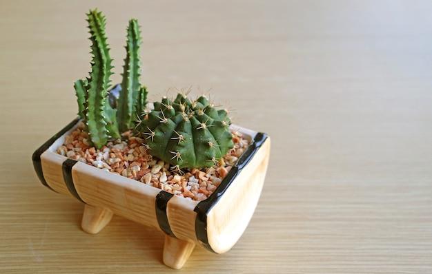 木製のテーブルに鉢植えのミニ妖精城サボテンとドワーフチンサボテン