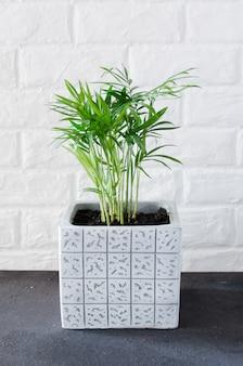 白いレンガの壁の近くの鉢植えの植物