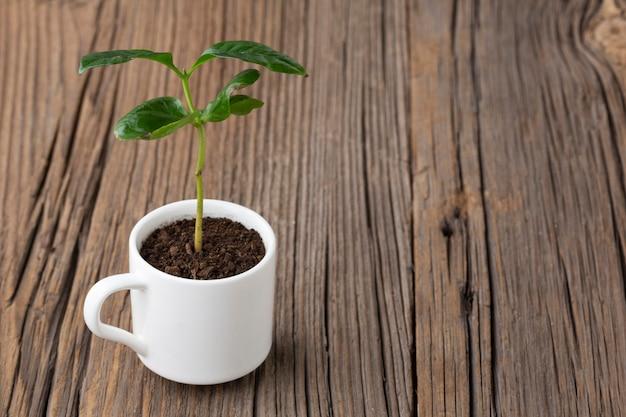 Комнатное растение на деревянных фоне
