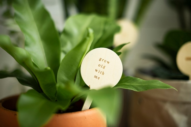 Potted plant with a message grow old with me