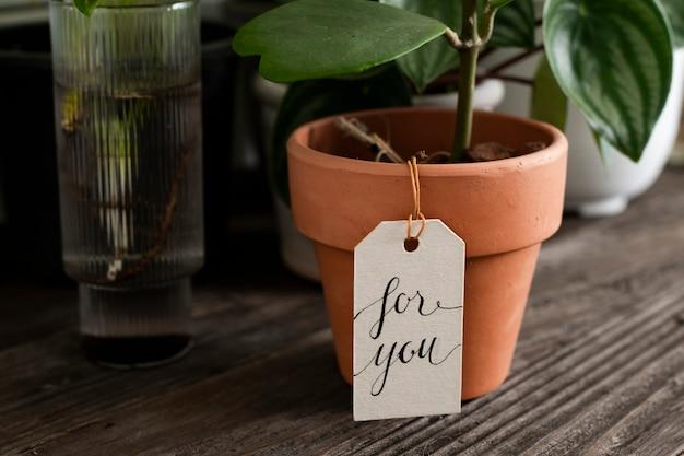 Pianta in vaso con un messaggio per te