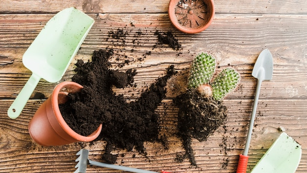 Potted plant with spilled soil; cactus plant and gardening tools on wooden table