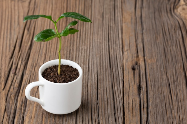 Potted plant on wooden background