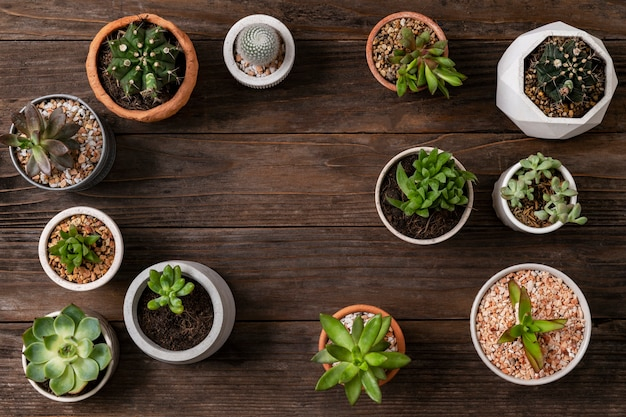 Potted plants flat lay background with blank space