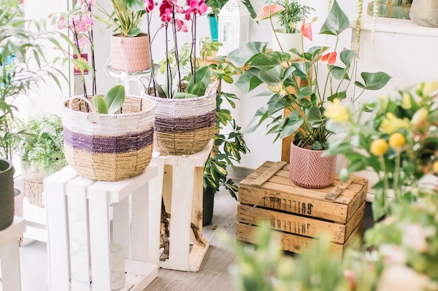 Potted plants in flower shop