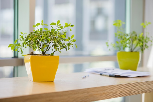 사무실에서 화분 프리미엄 사진