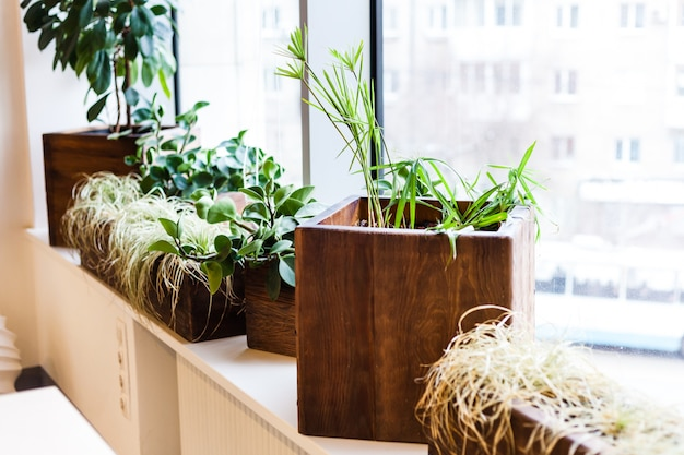 Potted plants for office home in large and small pots