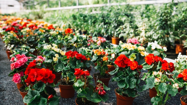 Potted plants with beautiful flowers growing in greenhouse