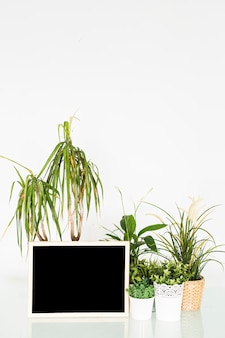Potted plants with blank slate on desk