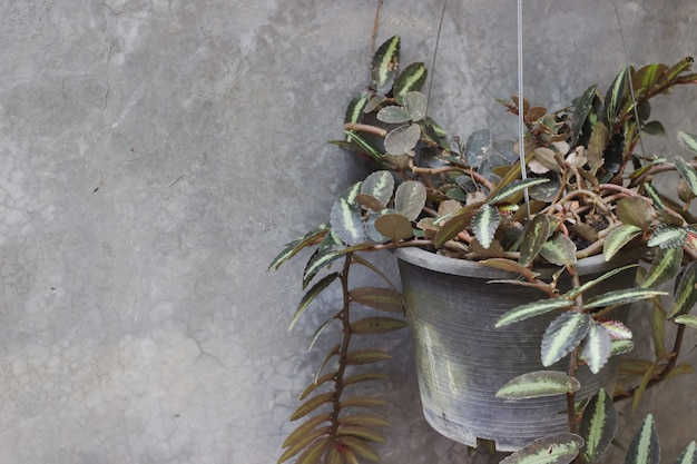 Potted plants with wall background