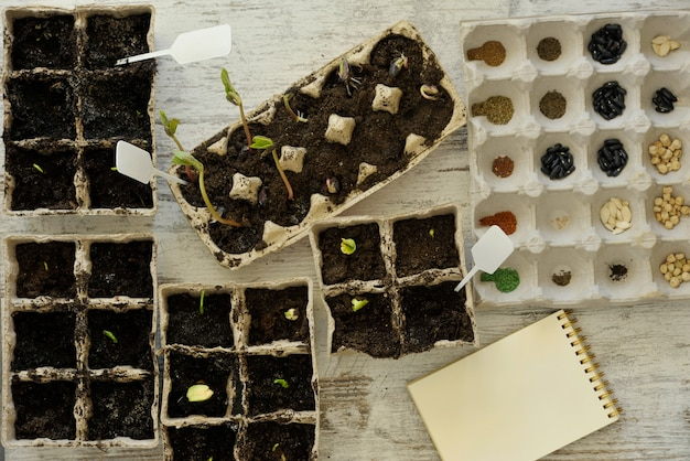 Potted seedlings growing in biodegradable peat moss pots on wooden background with copy space, view from above