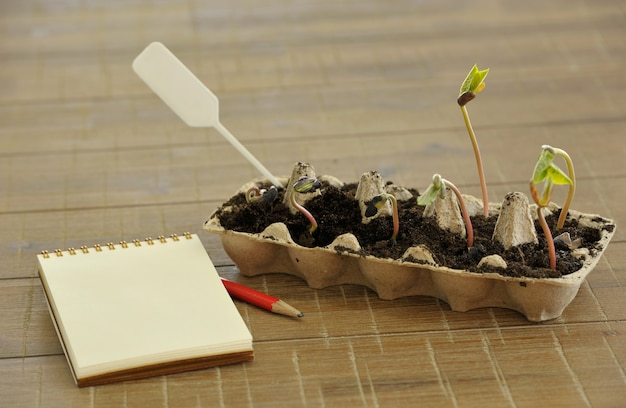 Potted seedlings growing in biodegradable peat moss pots on wooden background with copy space.