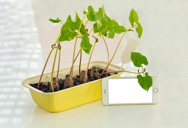 Potted seedlings growing in biodegradable peat moss pots on wooden background with phona and copy space.