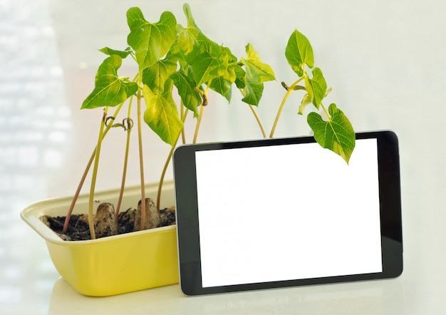 Potted seedlings growing in biodegradable peat moss pots on wooden background with phone and copy space.