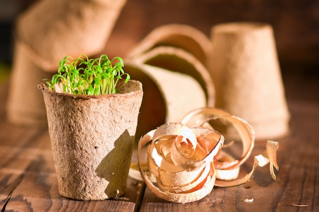 Potted seedlings growing in biodegradable peat moss