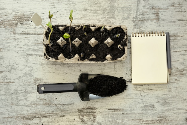 Potted seedlings growing in biodegradable pots on wooden background with copy space