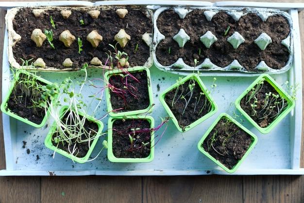 Саженцы в горшках, растущие в горшках из биоразлагаемого торфяного мха на деревянном фоне - молодые весенние растения - концепция нулевых отходов