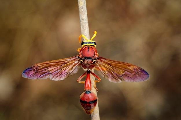 Оса гончарная (delta sp, eumeninae) на сухих ветвях. насекомое животное