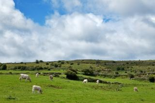 Poulnabrone 목초지 아름다운
