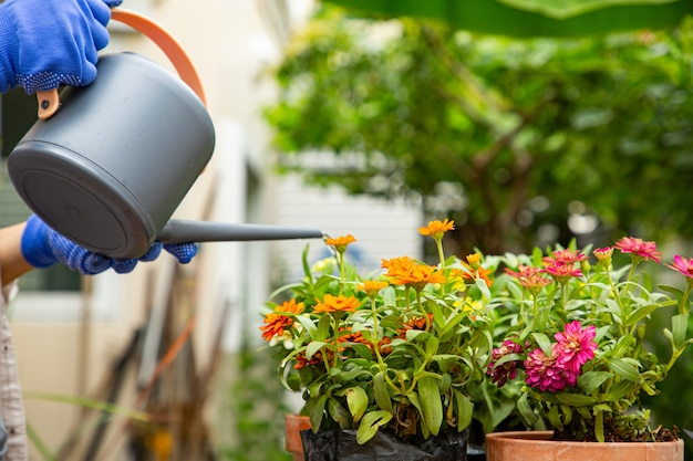 Pouring water to  plant in the outdoor.gardening and decorating for stay at home