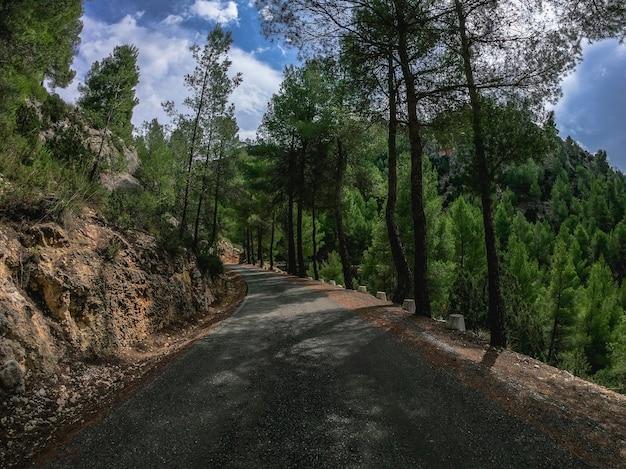 점수보기 운전하는 자동차 모드 외로운 늙음 커브 도로 통해 소나무 목재. 스페인의 지중해 소나무 숲인 남유럽의 nerpio 도로를 따라 운전하세요.