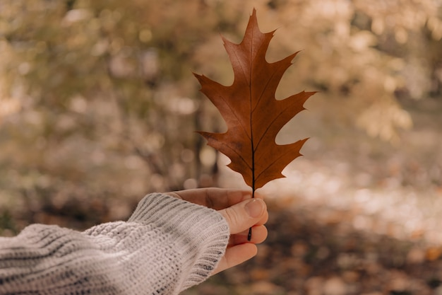 Pov of womans hand holding fall brown oak leaf atmospheric autumn composition sunday relaxing memori...