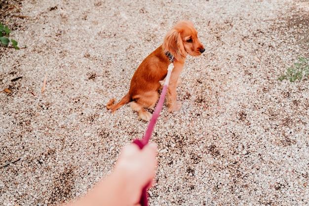 Женщина гуляя с ее милым щенком кокер спаниеля. pov рука и поводок