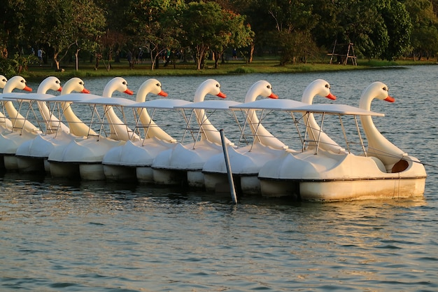 Pow of empty swan pedal boats moored on the lake in a park