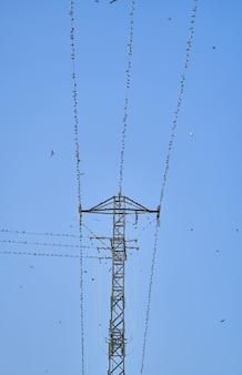 Линия электропередачи в небе. группа ласточек, сидящих на линиях электропередач