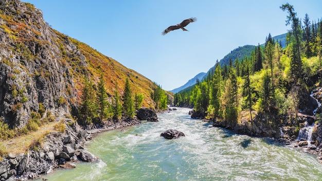 러시아 시베리아 알타이 산맥에 노란색 가을 나무가 있는 카툰 강에 전원을 공급합니다. 햇빛에 넓은 청록색 산 강을 따라 나무에 황금 잎과 화려한 가을 풍경.