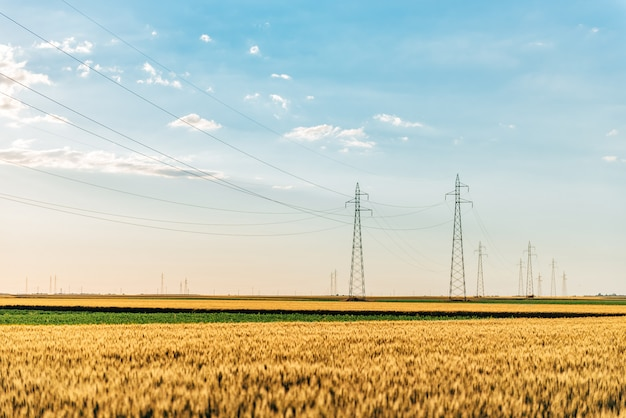 Power towers in the wheat field