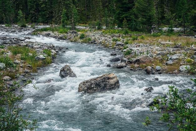 Через лес протекает мощная горная река. красивый альпийский пейзаж с быстрой рекой среди богатой растительности. живописный вид на камни с мхами и лишайниками, горную реку и богатую флору высокогорья.