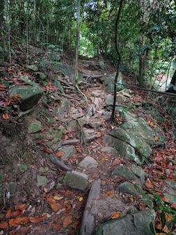 Мощные деревья в джунглях. крупные крепкие корни.