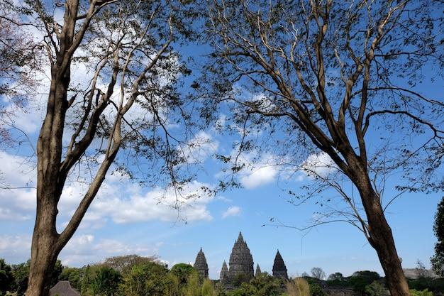 青空の背景と前景、ジョグジャカルタ、インドネシアのヒンドゥー寺院としての木が並ぶプランバナン寺院。