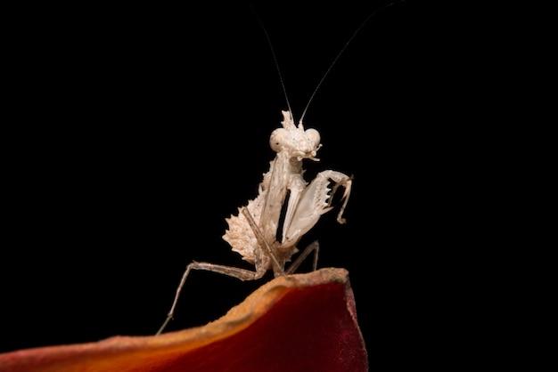 Praying mantis on flower